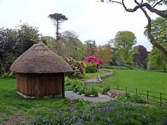 Sunhouse (Cornishcarolin.) Tags: cornwall httpswwwenysgardensorguk nature bluebells trees rhododendron azalea pine grass summerhouse