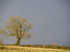 Storm Closing in. E.Staffs (Scone Face) Tags: tree storm staffordshire