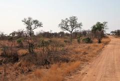 2019-102511 (bubbahop) Tags: 2019 africatrip southafrica part3 gadventures safari kruger national park