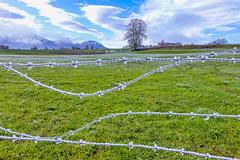 2019_Bavaria_frosty barbed wire (Joachim Spenrath Münster, Germany) Tags: trees bäume kälte kalt cold frost smog dunst fog nebel morning morgen bavaria allgäu alpen alps herbst autumn sunset dramatik drama wolken himmel sky clouds weide barbedwire stacheldraht green grün
