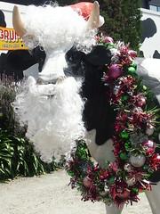 P1012944 1219 (sophbax22) Tags: phillip island cowes victoria australia grumpys cow christmas