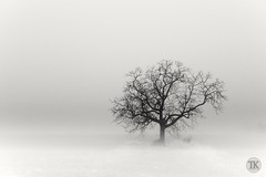 Minimal tree in fog (werbaer2) Tags: nebel winter tree minimalistic minimalistisch baum fog white blackandwhite