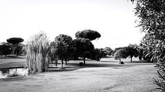 6762 - Golf club (Diego Rosato) Tags: golf club albero tree verde green natura pond stagno bianconero blackwhite parco medici park roma rome fuji x30 rawtherapee