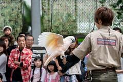 500_0911 (jinkemoole) Tags: bird kobedobutsuokoku zoo animal オオバタン moluccancockatoo