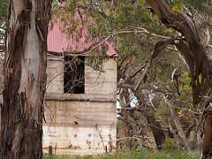 P1012924 1219 (sophbax22) Tags: phillip island victoria australia oswin roberts reserve