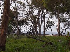 P1012907 1219 (sophbax22) Tags: phillip island victoria australia oswin roberts reserve