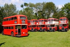 Photo of London Transport RT's & RTL - North Weald