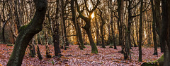 Ireland Wood, Leeds (Phil Songa) Tags: autumn leeds irelandwood woodland sunshine sun golden november 2019 sunrise morning