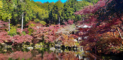 20191121_103542_Daigoji_03 (alzn) Tags: daigo kyoto japan koyo autumnleaves fallcolors lake pond japanesegarden buddhist shinto samsungs9