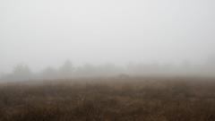 Hilltop View (LeftCoastKenny) Tags: losgatoscreektrail stjosephshill hill trees brush grass fog