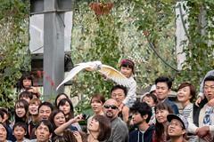 500_0897 (jinkemoole) Tags: bird kobedobutsuokoku zoo animal オオバタン moluccancockatoo