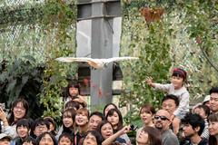 500_0896 (jinkemoole) Tags: bird kobedobutsuokoku zoo animal オオバタン moluccancockatoo
