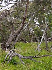 P1012912 1219 (sophbax22) Tags: phillip island victoria australia oswin roberts reserve