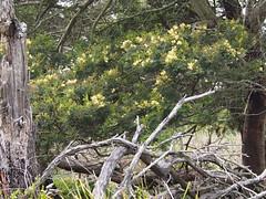 P1012910 1219 (sophbax22) Tags: phillip island victoria australia oswin roberts reserve