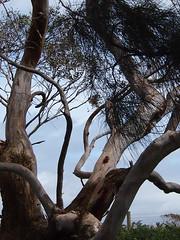 P1012906 1219 (sophbax22) Tags: phillip island victoria australia oswin roberts reserve