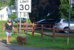 Limit 30-HFF (☼☼Jo Zimny Photos☼☼) Tags: fencedfriday fence lady dog speedlimitsign limit30