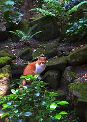gepflegte Wildnis (barmicity) Tags: katze cat steine farn tier animal