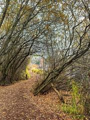 Marsh Island, Seattle (Curtis Cronn) Tags: trail marshisland parks trails seattle