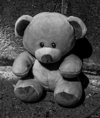 Teddy Bear Lost ©2019 Karp (kartofish) Tags: teddybear monochrome lost toy stuffedanimal sad fuji fujifilm xt2 p{hiladelphia pennsylvania usa centercity