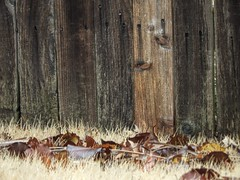 The Leaf Stops Here (clarkcg photography) Tags: fence leaves fall privacyfence woodenfence fencedfriday