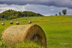 Pasture (mikederrico69) Tags: rural land landscape hay countryside grass forest green hills greenery farmland