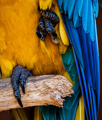 Feathers and Feet (topendsteve) Tags: bird parrot jungle gardens feathers plumage color a7r4 24105