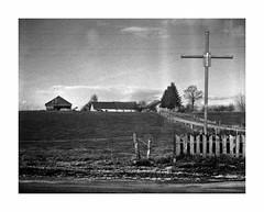 Camino Cristo (4Rider) Tags: warmia północ north landscape krajobraz pejzaż photoartist drzewo drzewa tree trees las forest poems poetry