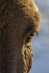 Cavallo (ELIA MORA) Tags: animali horse cavallo wildhorse