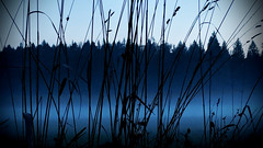 winter grass (sugarelf) Tags: pacificnorthwest nature fognight december farmland