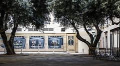 petite place dans Toulon (jemazzia) Tags: extérieur exterior esterno outside äubere buitenkant ville toulon oliviers olivos ulivi oliveiras olijfbomen olivenbäumen ombrage shadow schatten ombra sombra shaduw