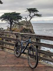 The lone Cypress (benjaminfish) Tags: carmel sea ocean monterey california december 2019