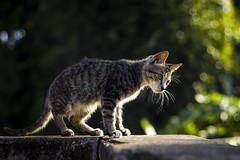 Morning sun (Chuminh9194@gmail.com) Tags: animal pet cat cute morningsun sunlight