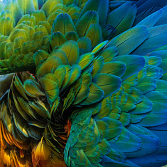 Macaw Feathers. (topendsteve) Tags: bird parrot jungle gardens feathers plumage color a7r4 24105