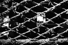 IMG_1447 (andreyassq) Tags: captive atmosphere atmospheric cell grid white whiteandblack window black light sunlight bw photographer photography blackwhite blackandwhite