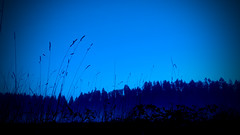 blue night skyline (sugarelf) Tags: pacificnorthwest nature december farmland