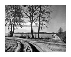 Donde estaba el camino Cristo (4Rider) Tags: warmia północ north landscape krajobraz pejzaż photoartist drzewo drzewa tree trees las forest poems poetry