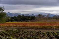 Bridlewood Winery 1 (borders92109) Tags: vinyard winery santa ynez central coast california mountains snow clouds storm los olivos sony a7ii tamron 2875