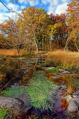 Route du rapin (hbensliman.free.fr) Tags: forest pentax pentaxart tree foliage travel fontainebleau autumn season leaf france nature pond