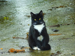 Street Kitten, posing for a picture on a rainy day (cami.carvalho) Tags: streetcat cat kitten rain chuva gatinho natureza nature