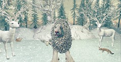 Aslan (Reaghan Resident) Tags: jinx we3roleplay mesh bento roleplay animal virtual secondlife love jian
