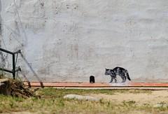 South_Europe_Art_Wall (uhtyjejik) Tags: barcelona spain france monaco montserrat art