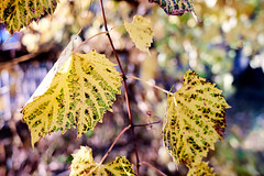 AF14430 (Robert Kielak/Photographer and filmmaker) Tags: branches countryside decoration autumnal autumnleaves falllandscape composition naturebackground concept blur blurred outdoor trees autumnforest organic fresh backdrop rural gold closeup dry wallpaper texture beauty scene oak day vibrant sunny green scenic beautiful seasonal november abstract brown sunlight bokeh background nature fall autumn foliage orange leaf tree season red yellow color park bright forest natural golden landscape october plant light outdoors sun maple pattern colorful garden environment branch flora