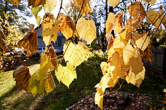 AF14332 (Robert Kielak/Photographer and filmmaker) Tags: branches countryside decoration autumnal autumnleaves falllandscape composition naturebackground concept blur blurred outdoor trees autumnforest organic fresh backdrop rural gold closeup dry wallpaper texture beauty scene oak day vibrant sunny green scenic beautiful seasonal november abstract brown sunlight bokeh background nature fall autumn foliage orange leaf tree season red yellow color park bright forest natural golden landscape october plant light outdoors sun maple pattern colorful garden environment branch flora