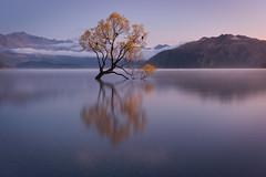 Solitary (Sinclair's) Tags: wanaka tree lake mountains new zealand south island sunrise blue hour