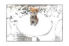 der Winter wird kalt dieses Jahr (WolfiWolf-presents-WolfiWolf) Tags: wolfiwolf wolfi wolf winter desk eneamaemü universe multiverses snow kalt schneedecke warmduscher aufgepasst rutschgefahr eis bibbern schnee spikes kontaktspray einfrieren ichbindaschristkindl deppert blue blueeyes hawideeeswirklichgmacht