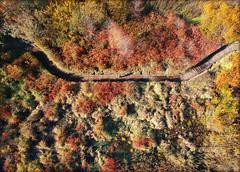 (FarhadFarhad .(Farhad Jahanbani)) Tags: drone selfie dji spark fly above colorful autumn fall colors wetlands boardwalk sun shadows sunshine shadow drones kirkland seattle washington state