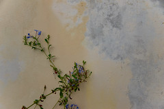 small blues (M00k) Tags: sicily volcano island lipari