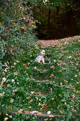 Mini kutya (sárkánymacska) Tags: olympusom2n kodak pro image 100 zuiko50mm12 magyarország hungary ősz autumn