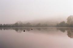 Őszi reggel (sárkánymacska) Tags: olympusom2n kodak pro image 100 zuiko50mm12 magyarország hungary ősz autumn