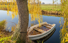 Rowboat in autumn (RuudMorijn-NL) Tags: alblasserwaard autumn bank bark blue boat branch bright colorful fall filled foreground full golden landscape leakage leaves moored nature netherlands orange outdoors perspective reflection river rowboat rowingboat rural salix season shore sky southholland sunken sunny texture tree trunk water weeping willow wooden yellow giessenlanden schelluinen schelluinsevliet hwerfst najaar blad bladeren afgevallen wilg treurwilg geel verkleurd wateroppervlak oever aangemeerd touw waterkant spiegelglad zuidholland seizoen takken zonnig herfstdag landschap roeiboot bootje boom bast textuur perspectief reflectie